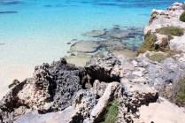 rottnest-island-106