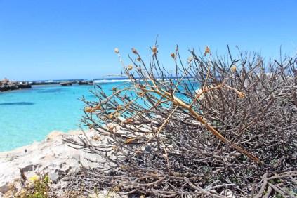 rottnest-island-111