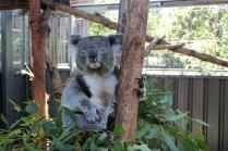 Jour 3_Port Macquarie (47)
