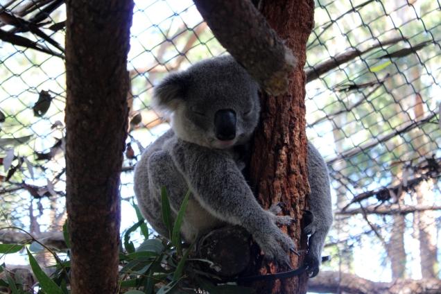 Jour 3_Port Macquarie (54)