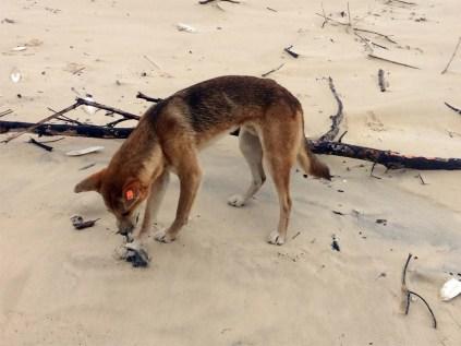 03. Fraser Island (118)