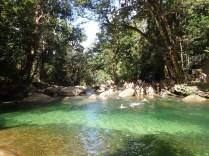 Rainforest Tours 1