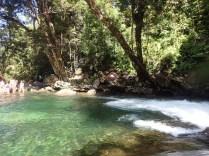 Rainforest Tours 2