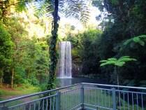 Rainforest Tours 3