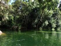 Rainforest Tours 4