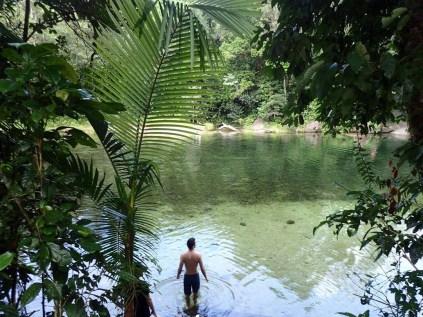 Rainforest Tours 5